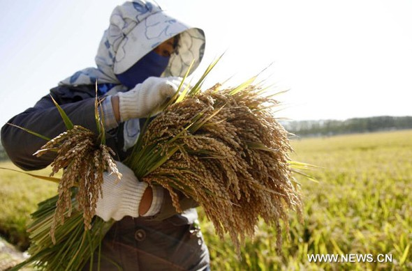 China's grain output likely to rise again